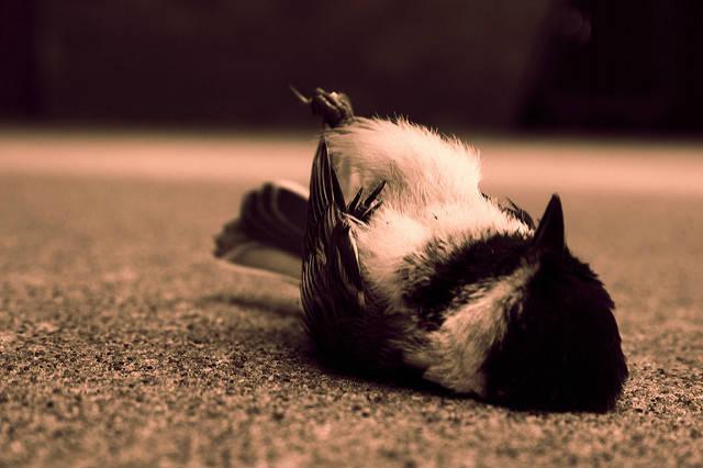 Passaro morto ao chão